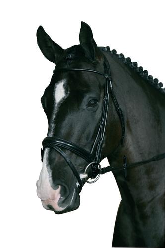 Hestefoder