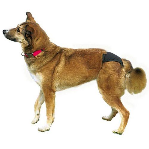 Hunde med bukser